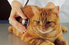 in-house pet diagnostics | Barnesville, MN | Barnesville Animal Clinic | 218-354-2366