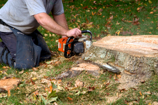 Englewood, CO - Stump Removal & Daughter - Stump Grinding