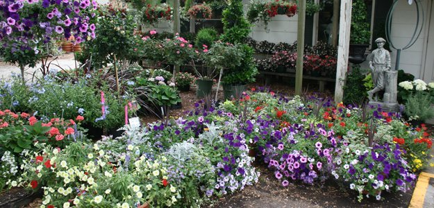 Image result for Plants - Retail