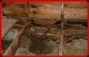 Mold & Mildew Remediation | Saint Albans,  VT  | Belrose Home Inspections | 802-309-2648
