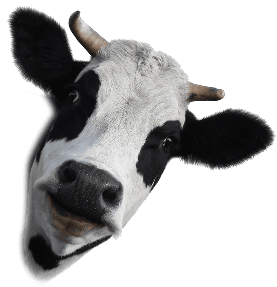 Cow Comfort Tools | Cow Drinking Accessories | Mondovi, WI