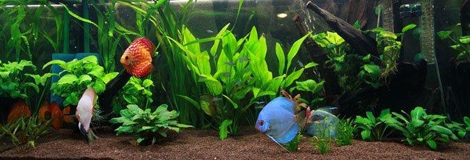 Aquarium Supplies   Tropical Fishes   Cincinnati, OH