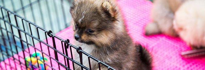 Dog and Puppy Adoption | Beagles & Boxers | Cincinnati, OH