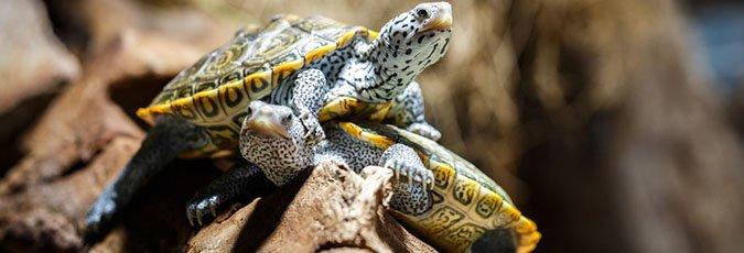 Reptile Adoption | Reptile Cages | Cincinnati, OH