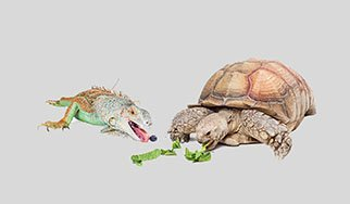 Animal House | Pet Adoption and Supplies | Cincinnati, OH
