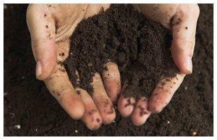 Soil holding