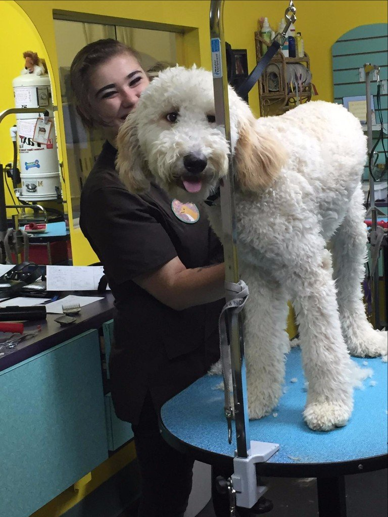 Pet grooming by audrey llc dog grooming omaha ne view all solutioingenieria Image collections