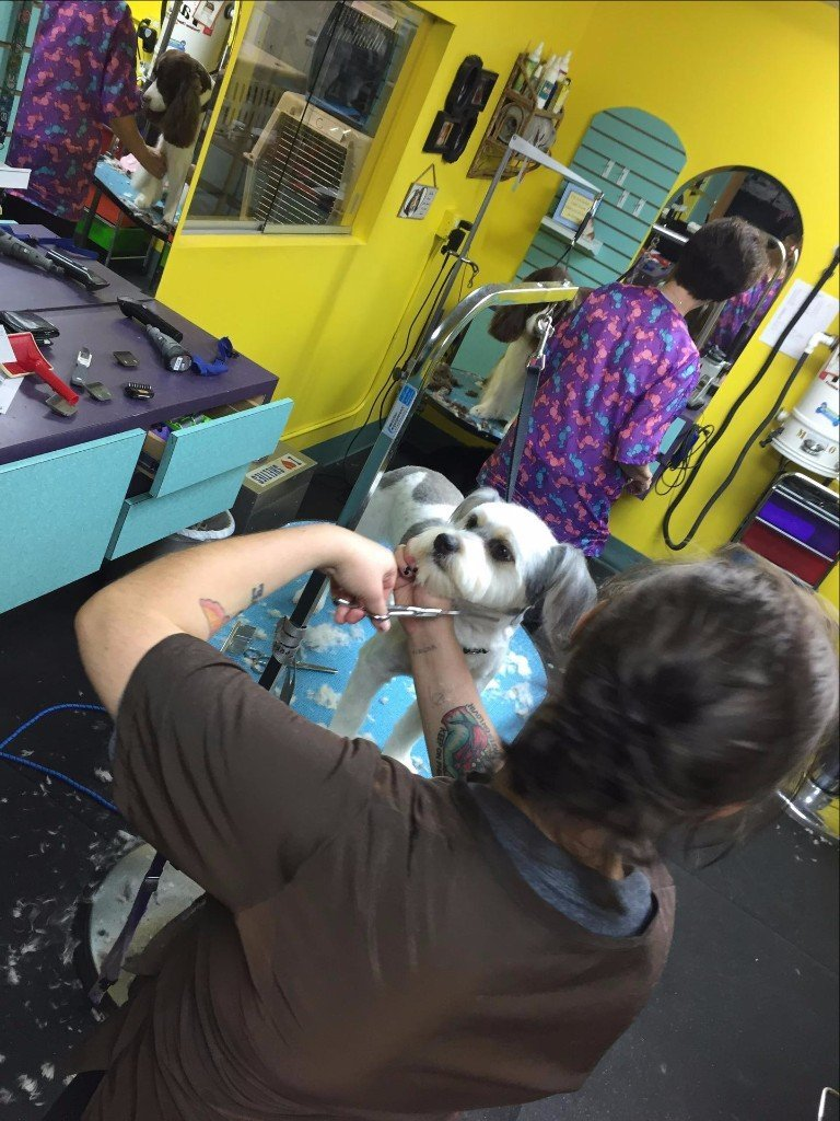 Pet grooming by audrey llc dog grooming omaha ne your trusted dog groomers in omaha ne solutioingenieria Image collections