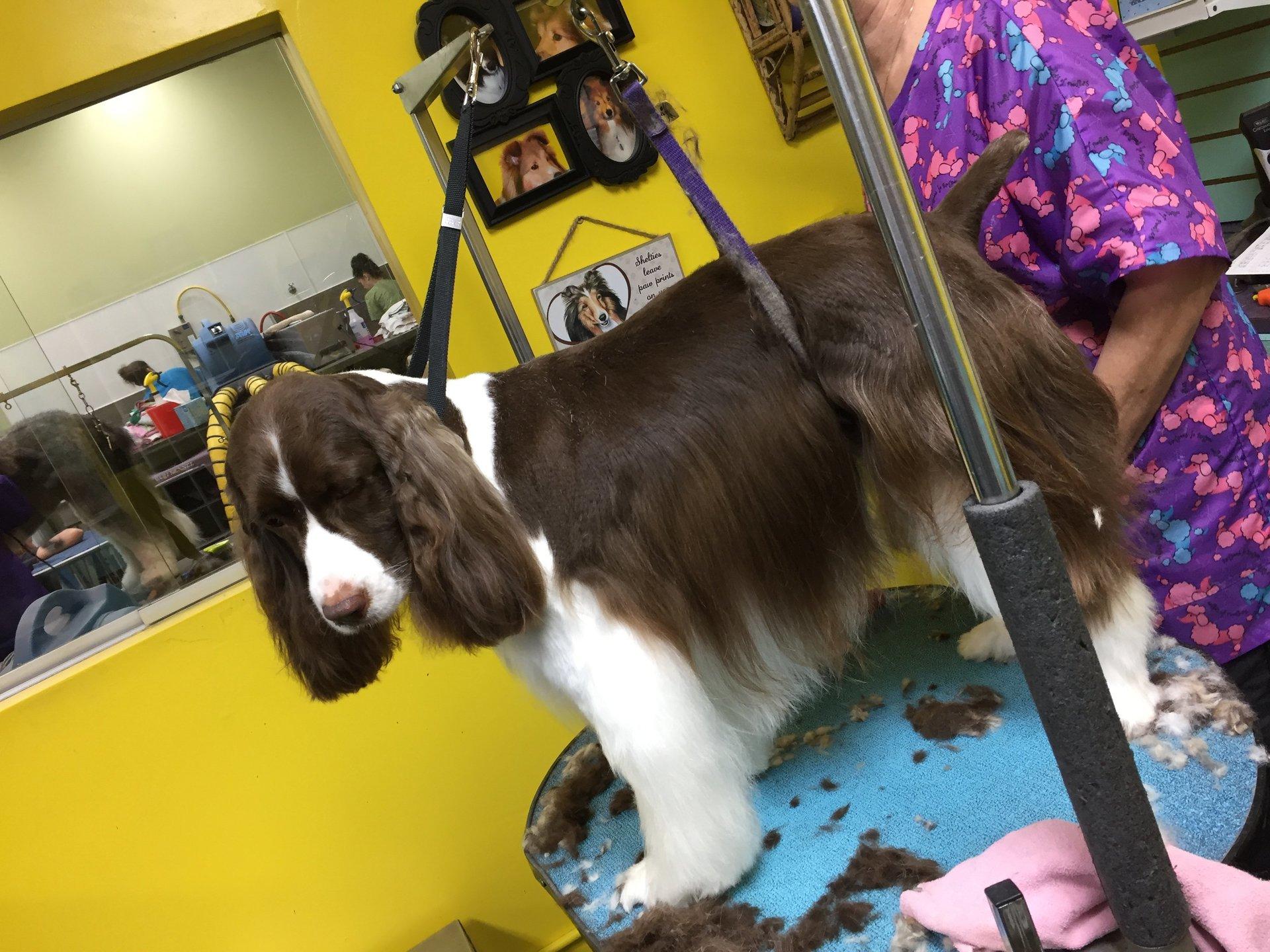 Pet grooming by audrey llc dog grooming omaha ne view all solutioingenieria Choice Image