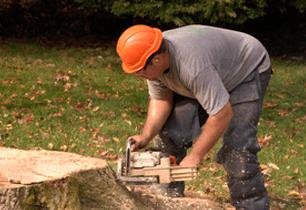 Bridgeport, CT - Northeast Tree Service - Stump Removal