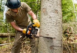 Bridgeport, CT - Northeast Tree Service - Tree Removal