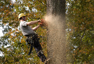 Tree Services - Bridgeport, CT - Northeast Tree Service