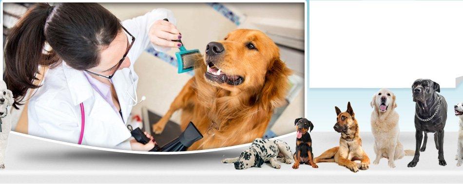 Dog hair drying after bath
