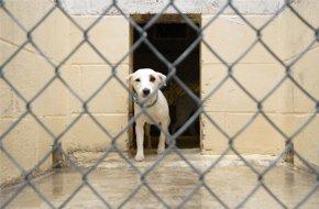 Pet Boarding - East Tawas, MI - Sunrise Side Veterinary Hospital