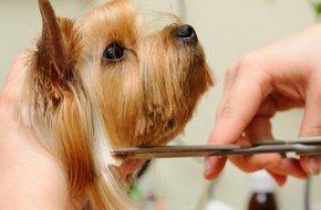 Pet Grooming - East Tawas, MI - Sunrise Side Veterinary Hospital