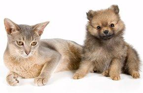 Pet Grooming - Sunrise Side Veterinary Hospital - East Tawas, MI