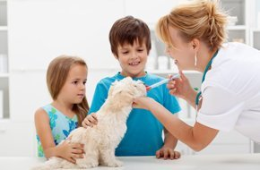Veterinary Services - East Tawas, MI - Sunrise Side Veterinary Hospital
