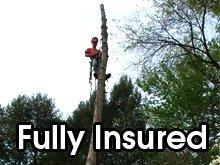 Tree Removal - Mocksville NC - Canopy Tree Service  sc 1 th 165 & Tree Service Mocksville NC - Canopy Tree Service