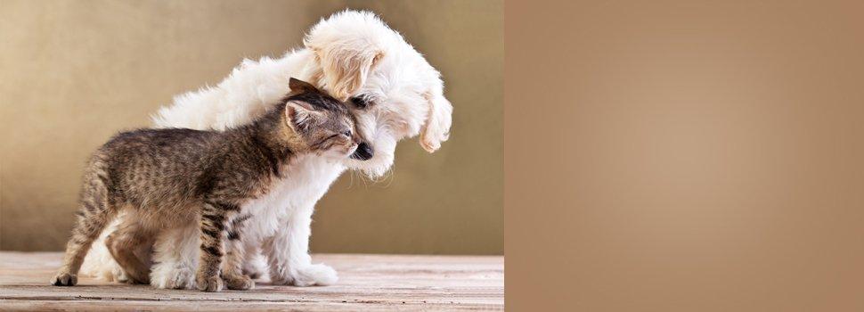 Pet Training | San Marcos, CA | San Marcos Kennels | 760-744-5171