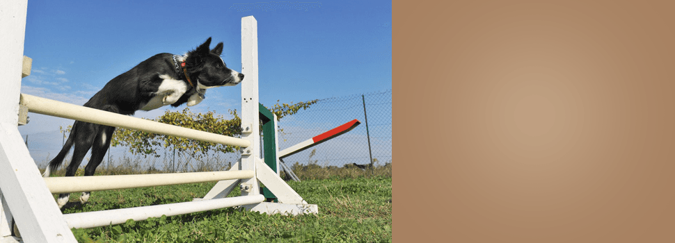 Dog being trained in a garden