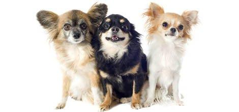Pet Services | San Marcos Kennels |  San Marcos, CA