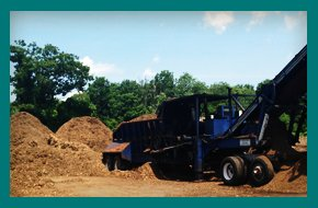 Pine | Williamsburg, MA | Lashway Forest Products | 413-268-3600