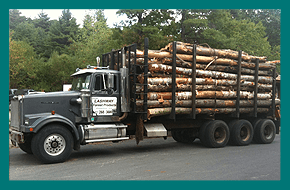 Logs | Williamsburg, MA | Lashway Forest Products | 413-268-3600