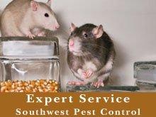 Pest Control Service - Berrien Springs, MI - Southwest Pest Control - Mice