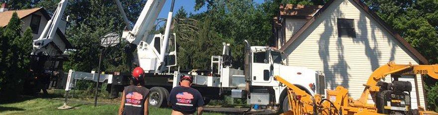 Tree crane services