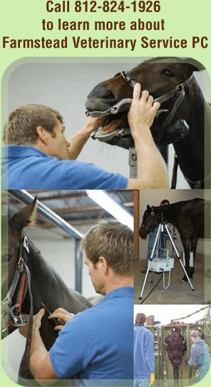 Vet hospital - Bloomington, IN  - Farmstead Veterinary Service PC - Animals - Call 812-824-1926  to learn more about  Farmstead Veterinary Service PC