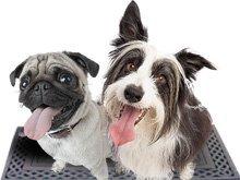 pet grooming - New Market, TN - Kodak Pet Grooming - dogs
