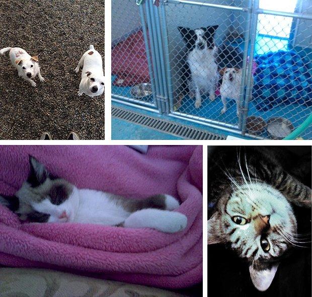 Pet Care - Richmond, IN - Bed Bath & Biscuits LLC