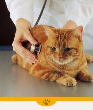 Appointments | Plattsburgh, NY | Eagle's Nest Veterinary Hospital | 518-562-1212