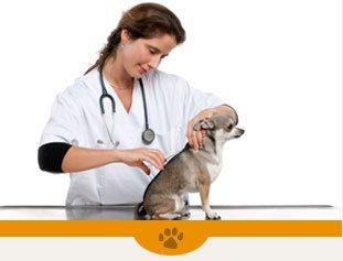 Veterinarian Services | Plattsburgh, NY | Eagle's Nest Veterinary Hospital | 518-562-1212