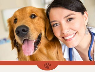 Veterinarian | Plattsburgh, NY | Eagle's Nest Veterinary Hospital | 518-562-1212