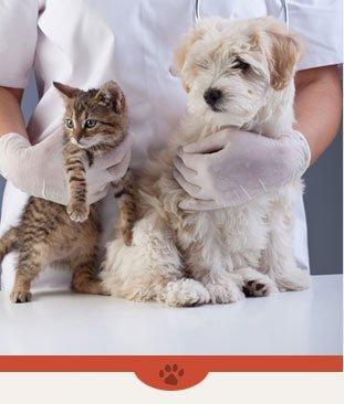 Re-Fills | Plattsburgh, NY | Eagle's Nest Veterinary Hospital | 518-562-1212