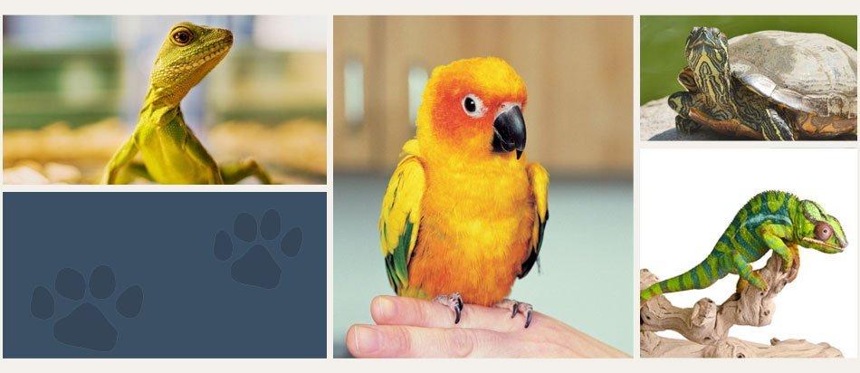 Exotic Animals | Plattsburgh, NY | Eagle's Nest Veterinary Hospital | 518-562-1212