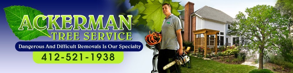 Tree Service - West Homestead, PA - Ackerman Tree Service