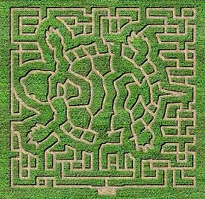 be a mazed corn maze montgomery mn montgomery orchard