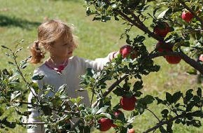 Orchard Activities | Montgomery, MN | Montgomery Orchard | 952-221-1051