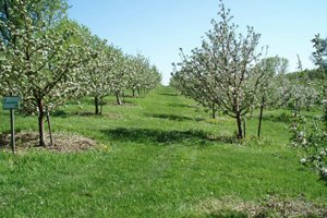Photo Gallery | Montgomery, MN | Montgomery Orchard | 952-221-1051