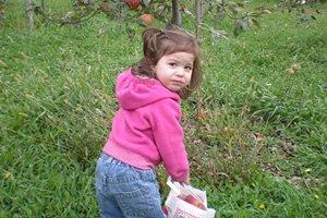 Little girl picking apples