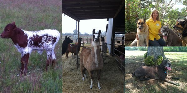 pet and livestock sitter giddings tx k k pet watch