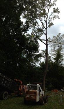 Tree Removal - Salisbury, NC - George Stirewalt Landscaping-Grading-Hauling