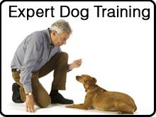 Dog Training Lessons - Longmont, CO - Doggy Do-Right LLC