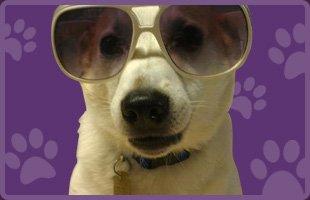 pet grooming products | Contact | Fang.Pan@hibu.com | 617-277-2627