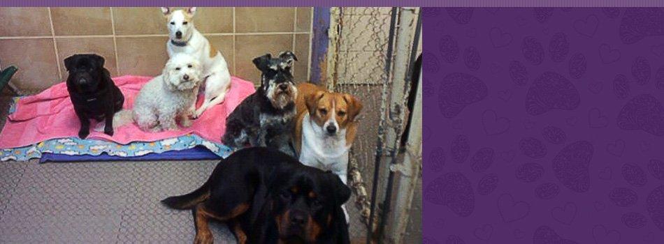 pet litters | Contact | Fang.Pan@hibu.com | 617-277-2627