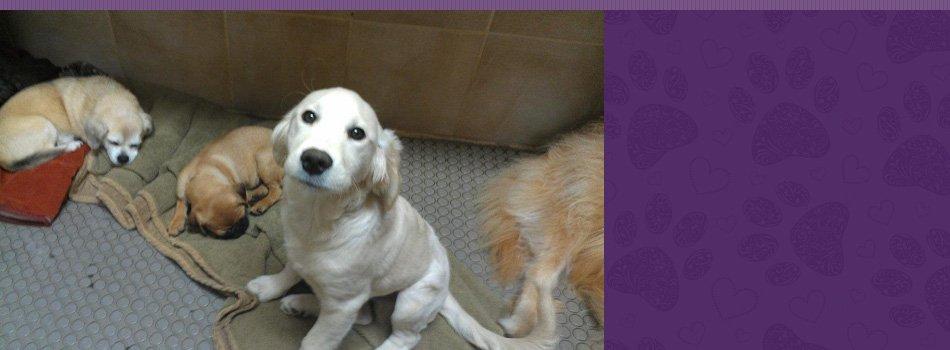 pet beds   Contact   Fang.Pan@hibu.com   617-277-2627