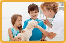 Animal Care | Keaau, HI | Kilauea Veterinary Services | 808-966-8582