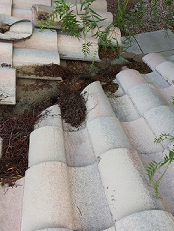 Debris and plant on tile roof